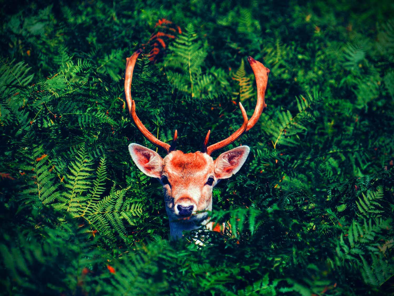 关于鹿先生